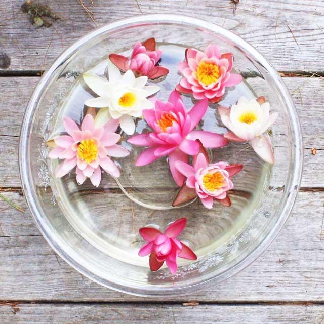La signification du lotus dépend de sa couleur