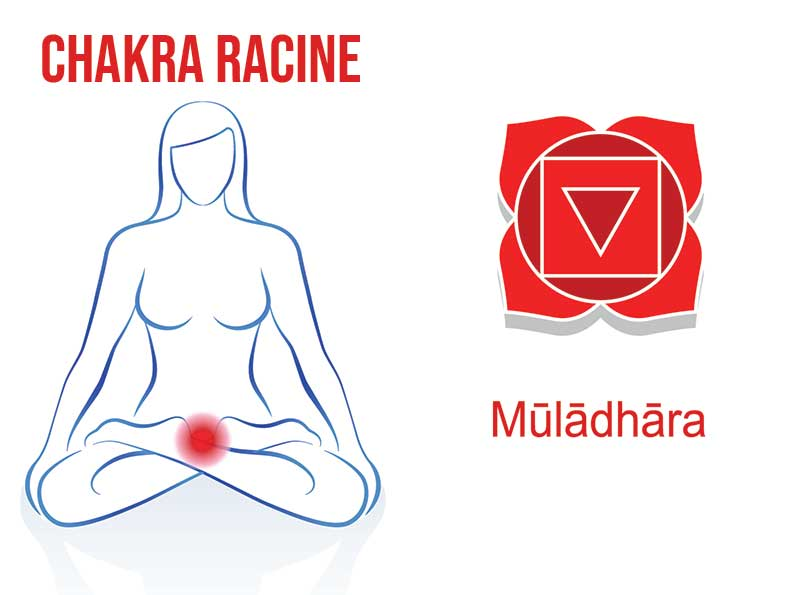 Où se situe le chakra racine ? Le premier des 7 chakras.
